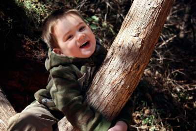 A toddler climbing a tree