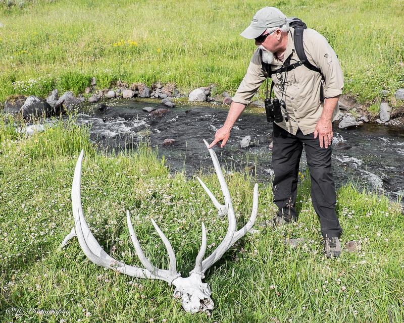 elk bones-5861