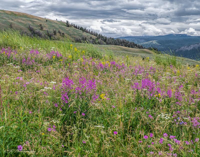 wildflower hill-