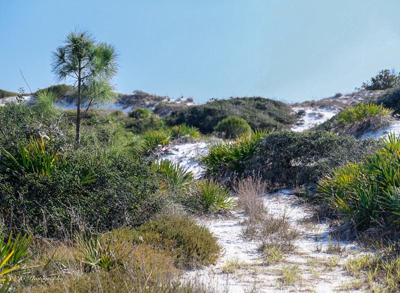 dunes-4387