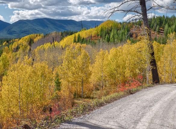 aspen-road-5690tiff