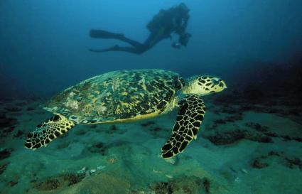 Diving Isimalango Wetlands