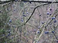Beeren im Wildgehege