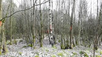 Irrlichter führen in den Wald