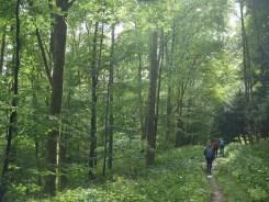 Hinein in den Oberwald