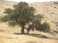 Bäume mit Herde
