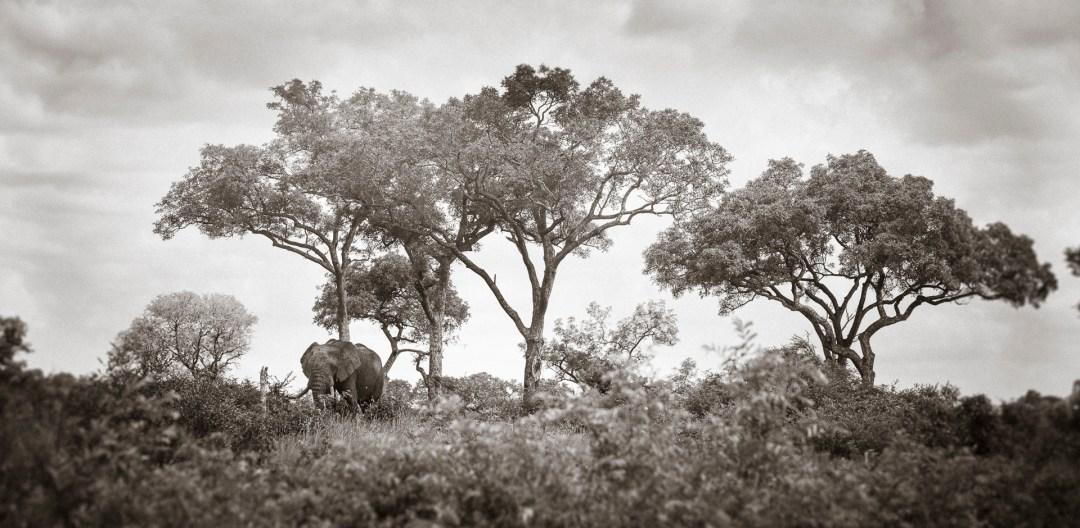 Skukuza Safari Lodge and Private Safari