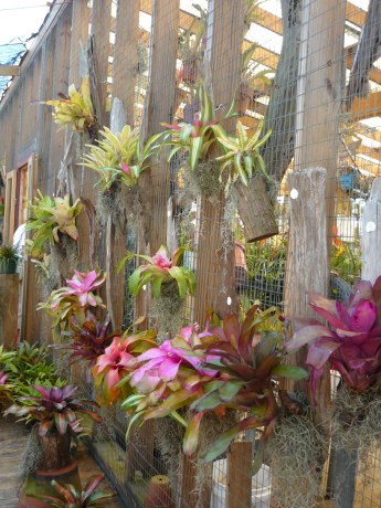 Bromeliad wall in New Orleans