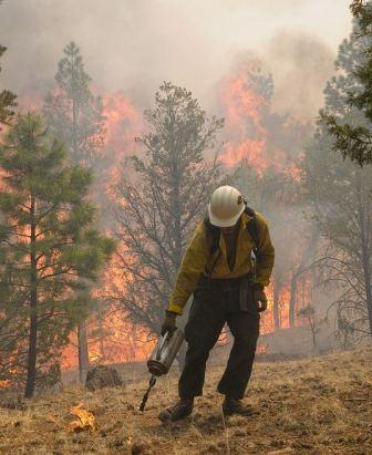 Wallow fire drip torch 6-8-2011