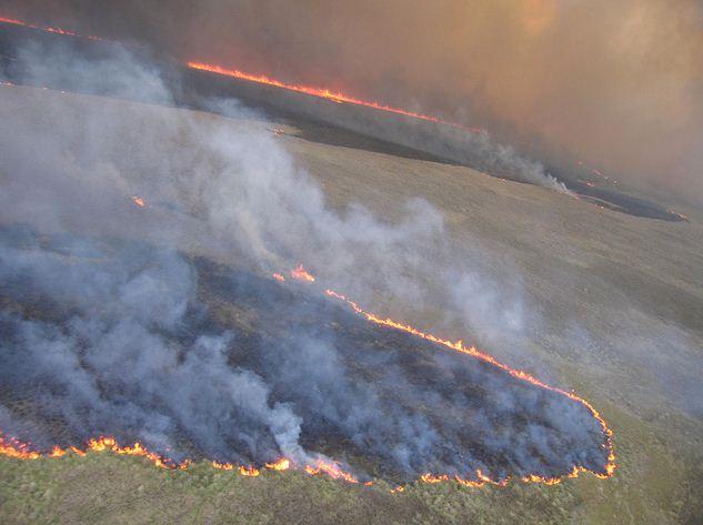 Everglades National Park, Coastal Prairie prescribed fire, May, 2011. NPS photo by Jennifer Brown