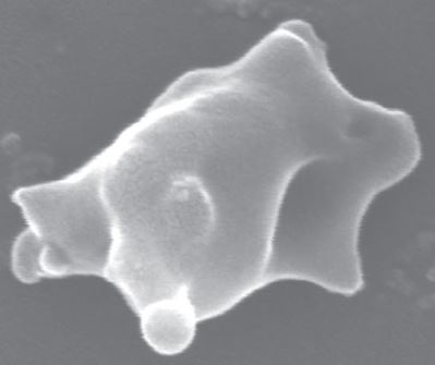 Embedded soot particle