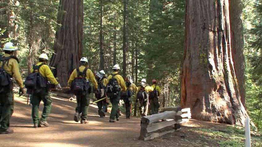 NPS crew at the Tuolumne Grove of Giant Sequoias