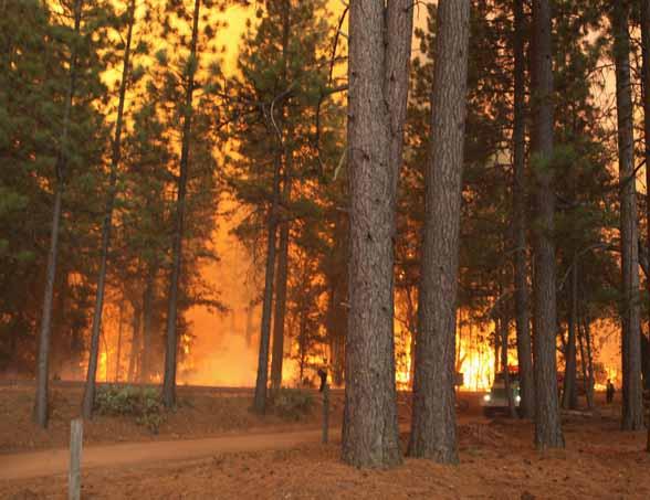 Rim Fire, August 21, 2013