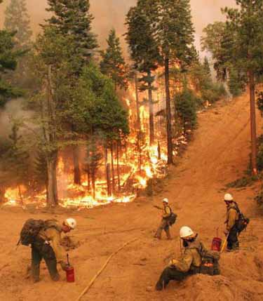 Silver State Hotshots Rim Fire