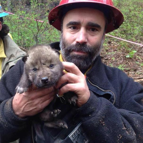 Kenai National Wildlife Refuge firefighter Brian Nichols with wolf pup