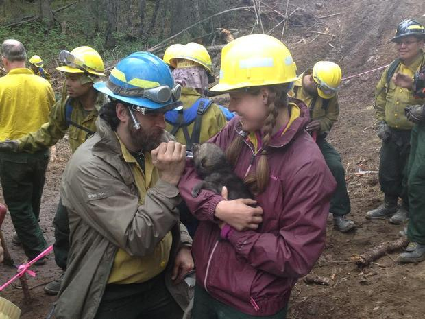 Medics Eric Zucker and Alicia Renfer rehydrate and remove porcupine quills from a wolf pup