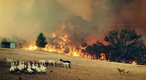 South Africa bushfire