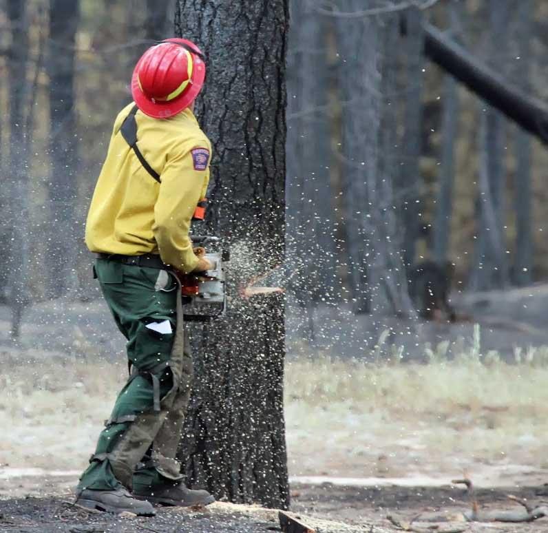 black forest fire faller tree
