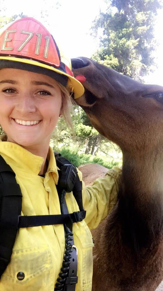 Elk and firefighter