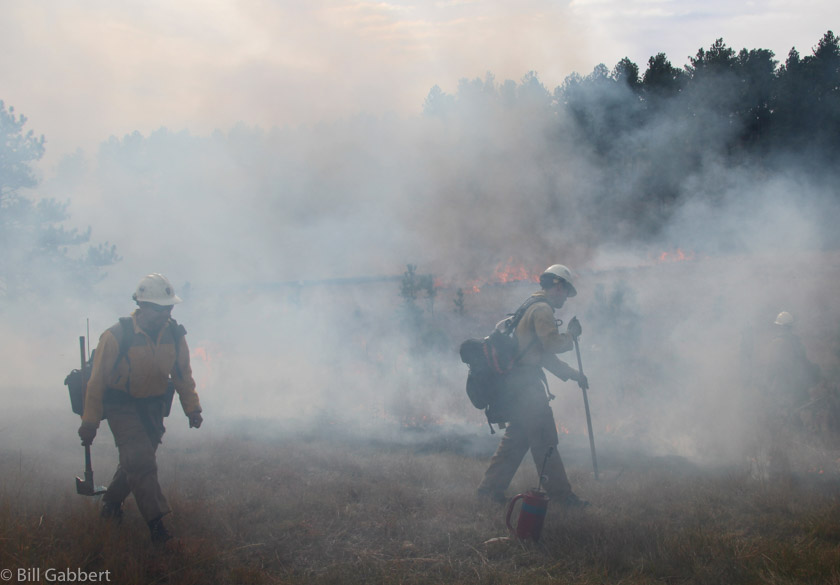 firefighters smoke cancer cold brook prescribed fire