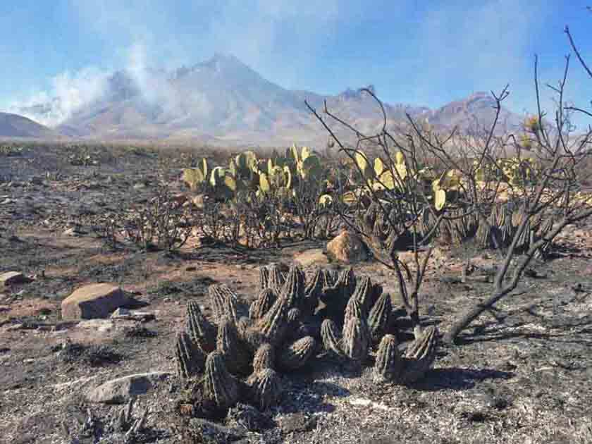 The desert changes one year after the Powerline Fire in Big Bend NP