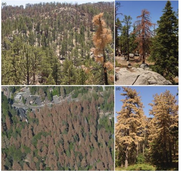 Forest Responses Severe Drought