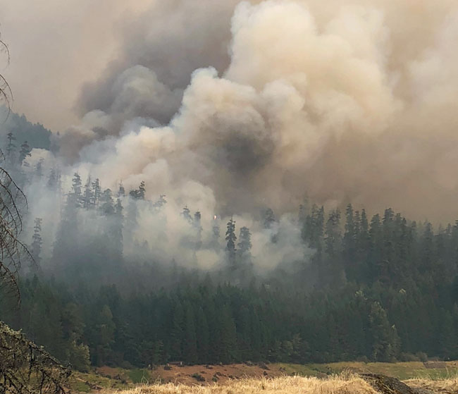 Terwilliger Fire