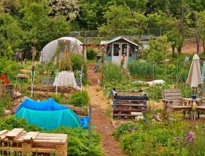 Jamie's allotment