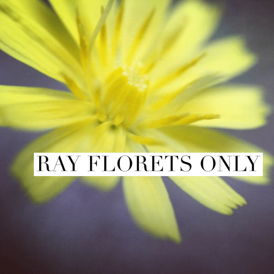 ray florets only