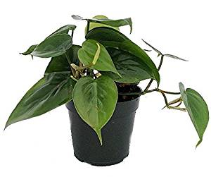 Indoor House Plant