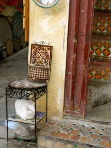Medina cat, Fez, Morocco
