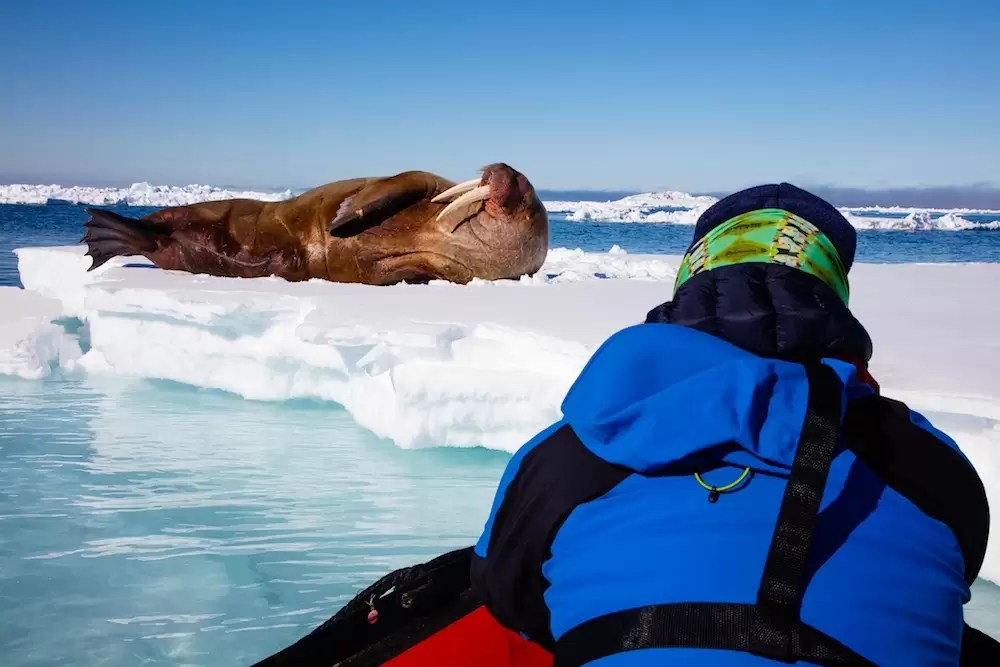 Wild Focus group member photographing walrus from Zodiak