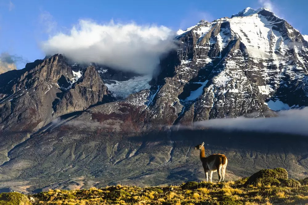 A guanaco standing in the morning sun in Patagonia