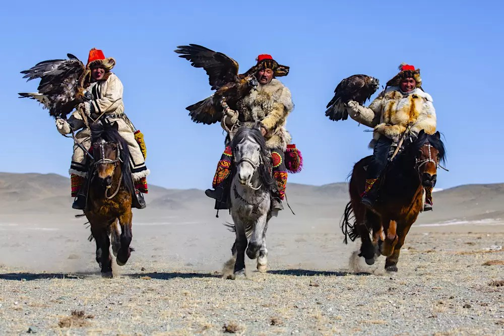 Eagle hunters with their golden eagles galloping on horseback