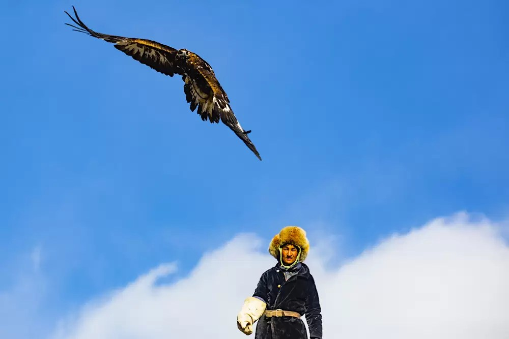 An eagle hunter releasing his golden eagle during a hunt, Bayan Ulgii Province