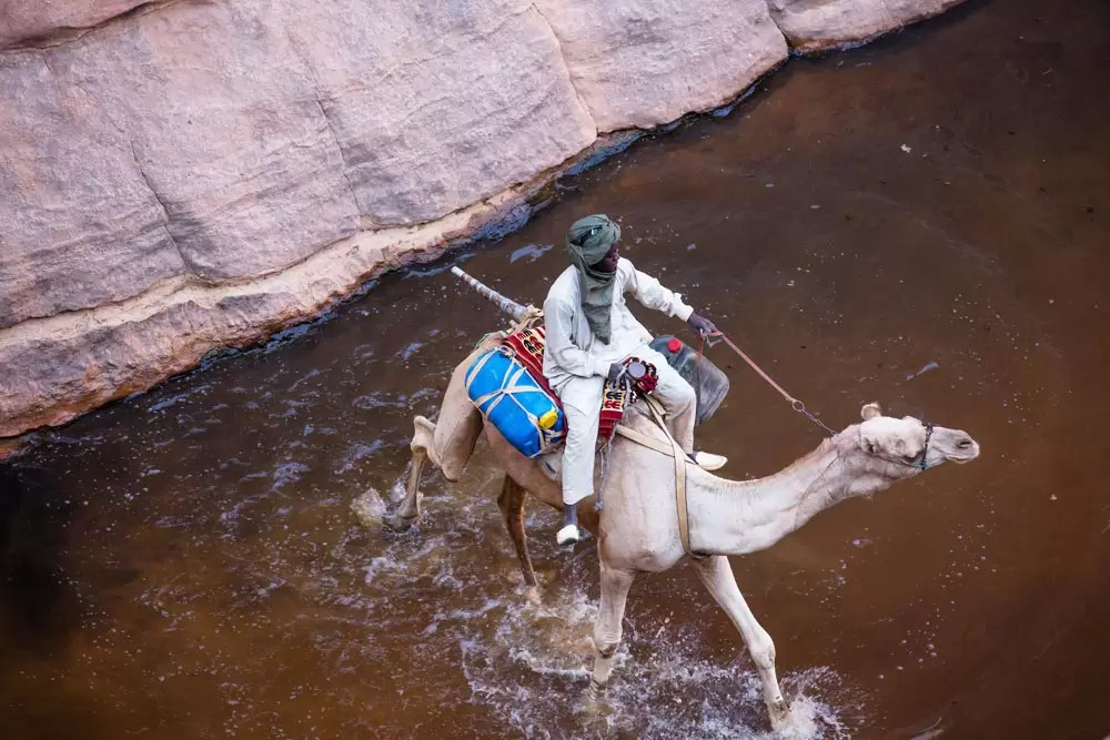 Camels in Ennedi, Chad