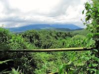 Bamboo covered hills of Rwanda