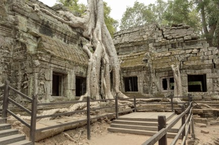 Ta Prohm a.k.a Tomb Rider Temple