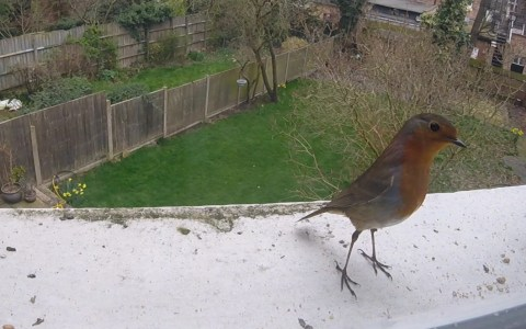 Robin on our bird cam!