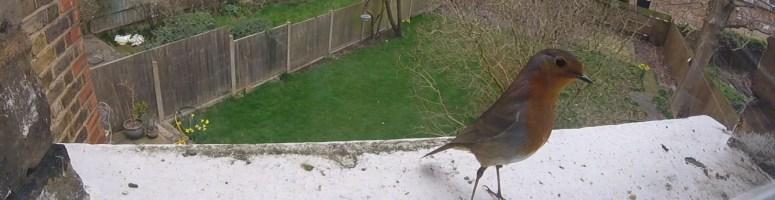 Robin on our bird cam!