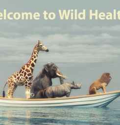 Wild Health June Interoperability Summit reader special ticket offer