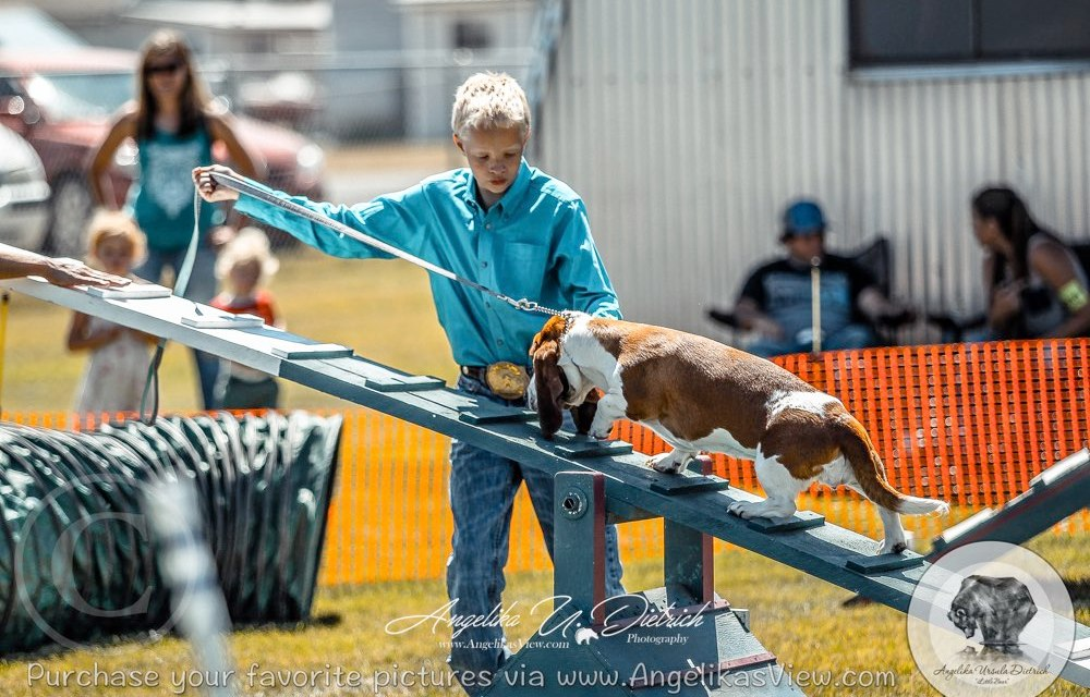 2018 Wallowa County Fair Dog Show Results