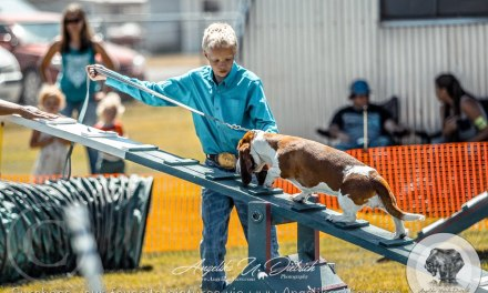 Wallowa County Fair Results Dog Show, Saturday, Aug 1, 2020