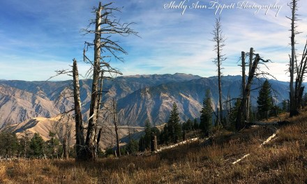 Wallowa Mountains Hells Canyon Trails Association has sprung into spring