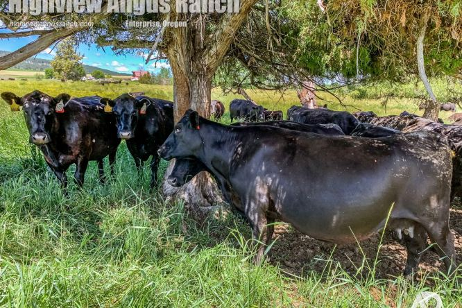 VIDEO: Out and about with Jeff, cows, and calves on Fathers Day