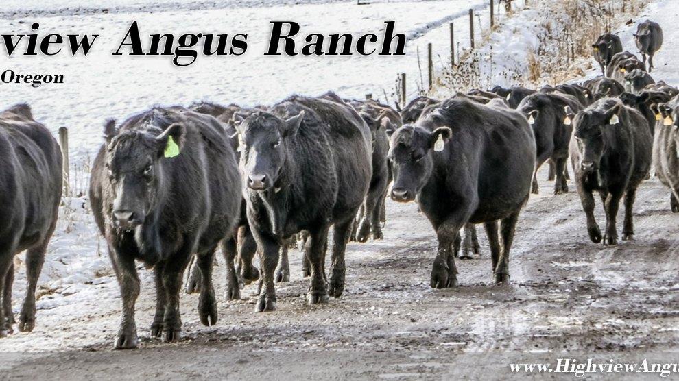 VIDEO: January at Highview Angus Ranch (2018)