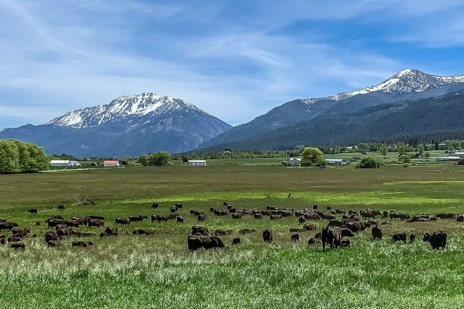 VIDEO: Highview Angus Ranch, June 1, 2021