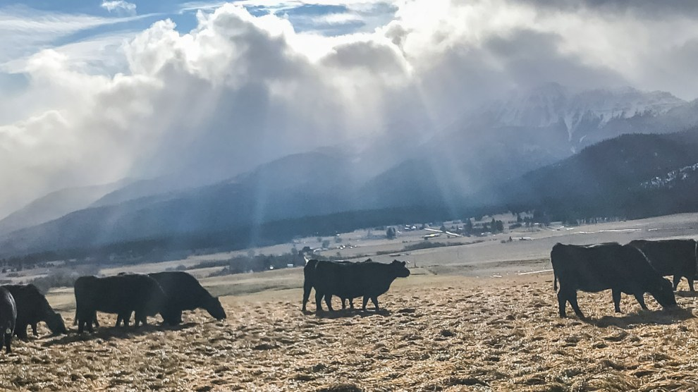 VIDEO: Winter Grazing at Highview Angus Ranch (2020)