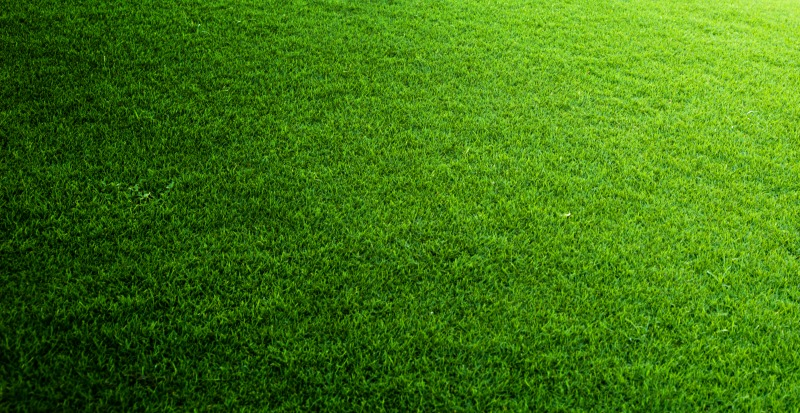 how to choose the right turf for your new lawn