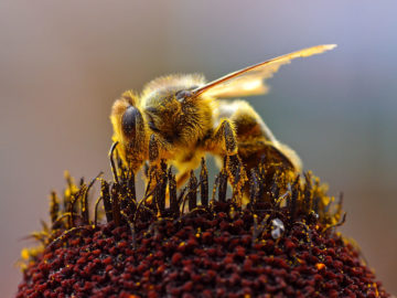 It's World Bee Day!